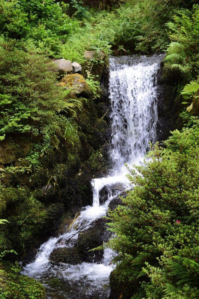 Little forest waterfall